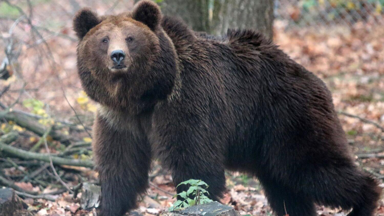 медведь трейдинг рынок